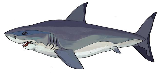 Great white shark concept
