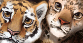 Adopt a Big Cat to Support WWF's Conservation Work Teaser Image